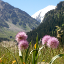 Tien Shan - the Mountains of Heaven