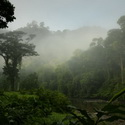 DANUM VALLEY DAWN