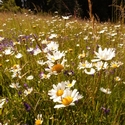 A glimpse of the flowery meadows encountered