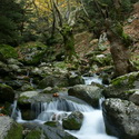 FOREST STREAM, Taygetos