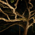 GHOSTLY TREE, La Ensenada