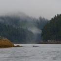 Humpback, very close to shore indeed, Vancouver Island