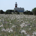 Lighthouse and pasque flower seedheads, Narsholmen, Gotland
