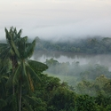 Misty Dawn, Papua New Guinea