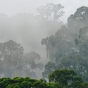 MISTY RAINFOREST, Danum