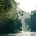 MORNING LIGHT ON KINABATANGAN, Sukau