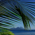Palm leaf and volcanoes, Papua New Guinea