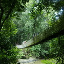 RAINFOREST BRIDGE, Danum Valley