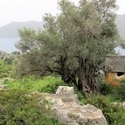 Tombs at Kekova