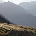 VINE CULTIVATION, Elqui Valley