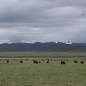 Yak pastures at 4000m west of Litang