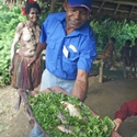 Ferns and fish to add to the stew, Karawari PNG